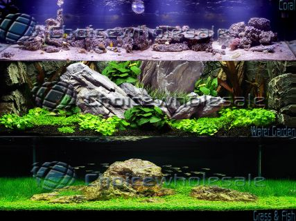 plasma-aquarium-back-ground-choicewholesale-logo.2